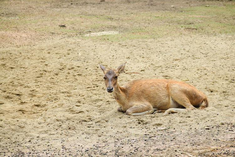 High angle view of rabbit on land