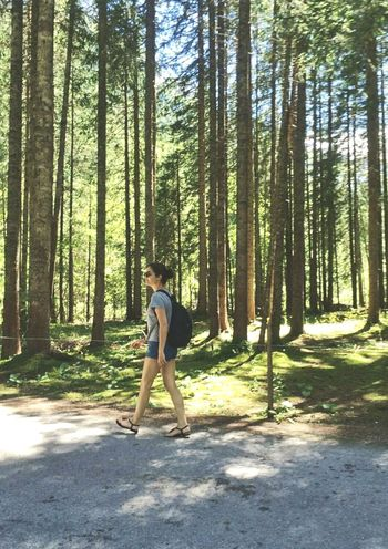 Gstaad Trees And Nature Forest