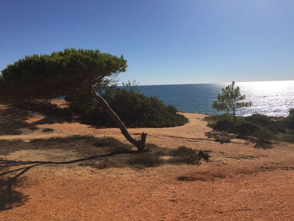 Tree Nature Tranquil Scene Sea Water Clear Sky Tranquility Scenics Beauty In Nature Beach Sand Outdoors Day Horizon Over Water Growth Landscape One Person Sky People Portugal Algarve Blue Sky No Filter No Edit/no Filter Nature