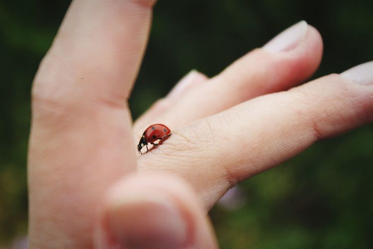 Close-up of ladybug on finger