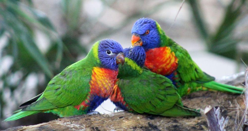 birds of a