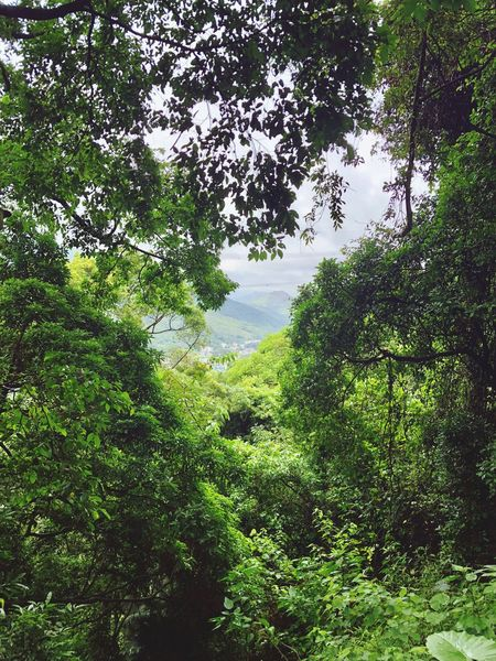 View through the trees Wildlife Mountain View Wildlife & Nature Botanical Garden HongKong Travel Destinations Plant Tree Green Color Water Growth Nature No People Day Beauty In Nature High Angle View Tranquility Outdoors Full Frame Land Tranquil Scene Sunlight