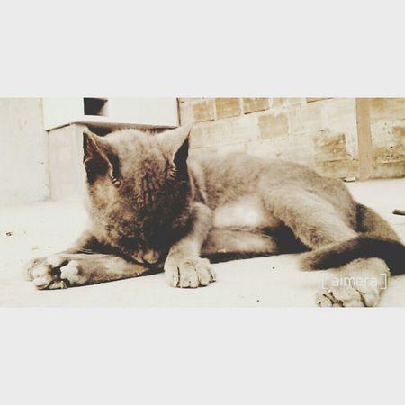 MyLittleCat 💕 🐱 Relaxing Catlover ♡ Inlove 😍
