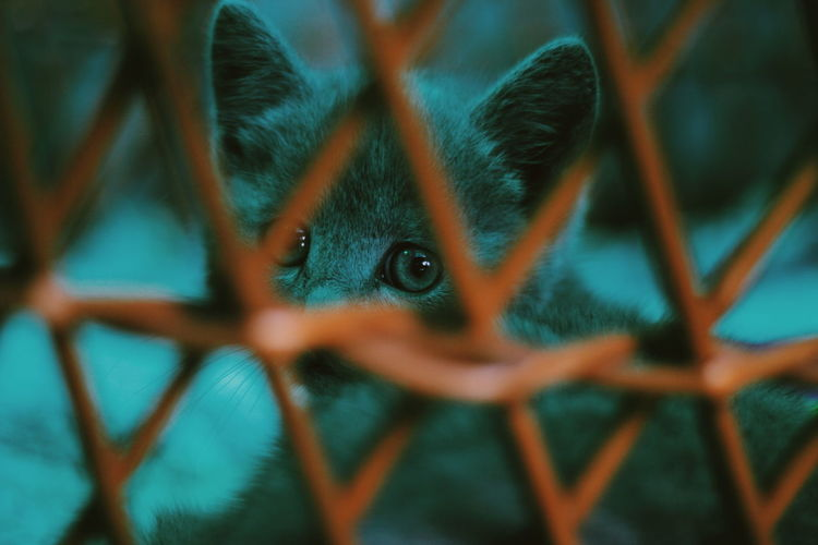 Eyes Cat See Colour Of Life Light Detail Colors RussianCat
