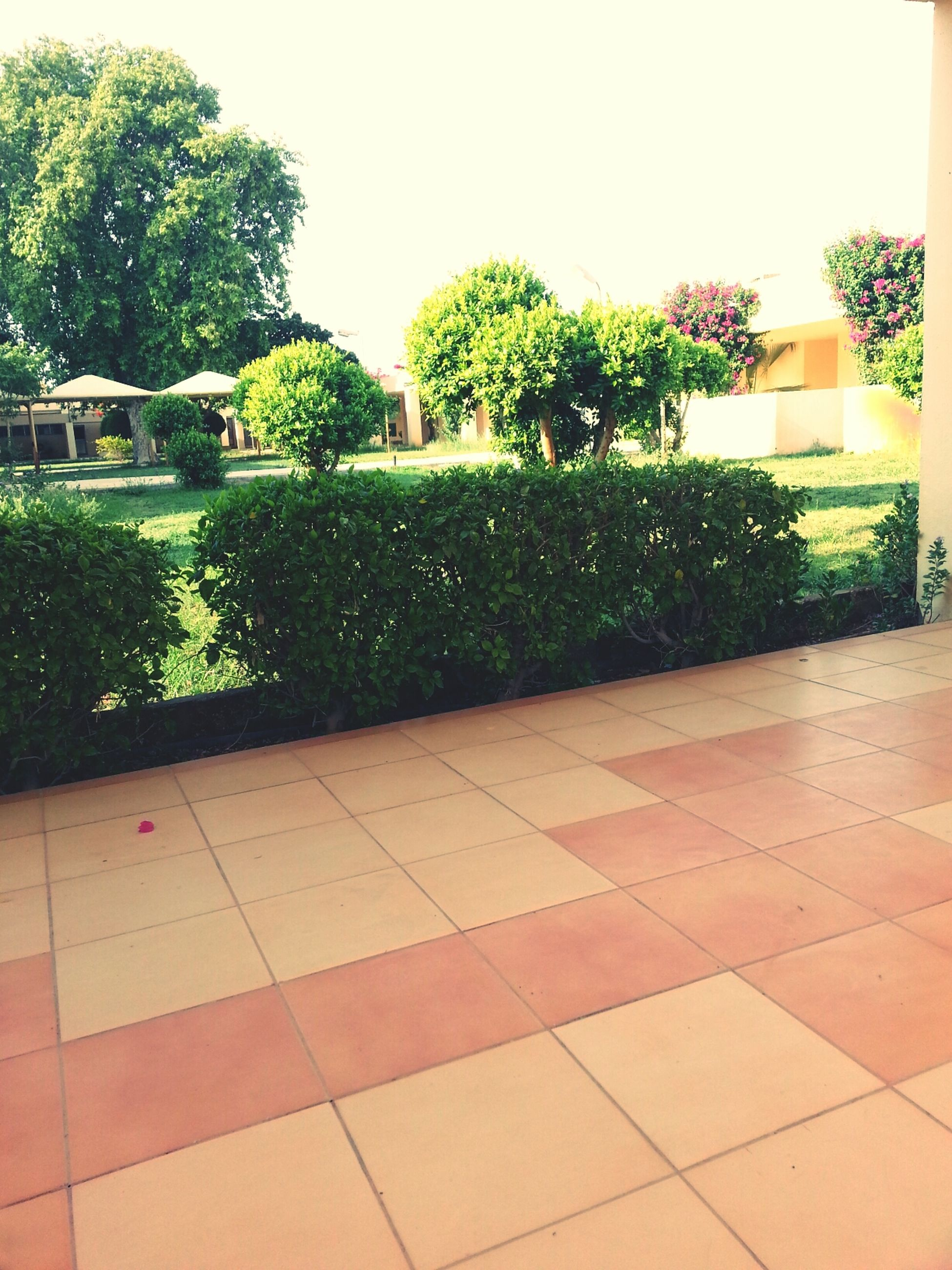 tree, green color, growth, plant, built structure, architecture, building exterior, formal garden, potted plant, clear sky, nature, day, green, park - man made space, outdoors, house, no people, paving stone, growing, water