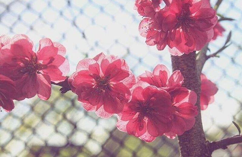 ... Zieh dich warm an. Draußen sind kalte Leute underwegs 😯🌼🐦🌞 Flowers Garden Springfield Spring Instaflower Outdoor POTD Instapic Instago Igers IGDaily Nature Vergissmeinvergissmeinnicht Everymomentmatters Kissofspring Flowerstagram Canon