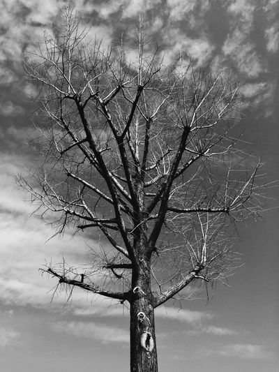 Tree Bare Tree Plant Sky Branch Cloud - Sky Nature