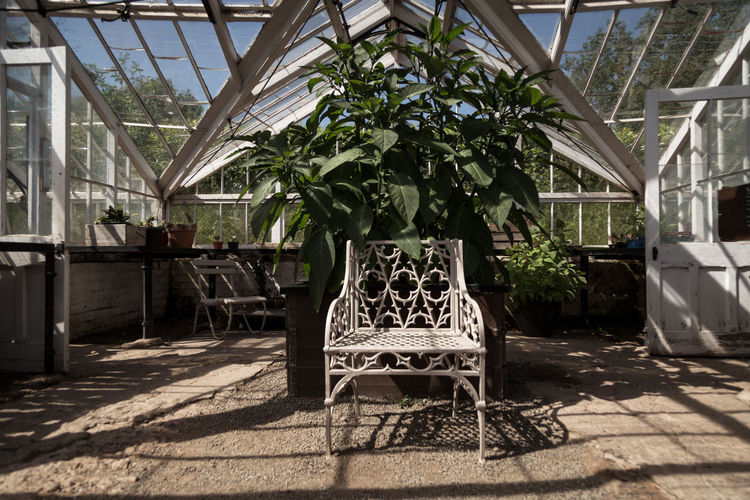 Empty chairs and table in greenhouse