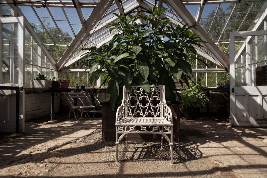 Chic Vibes - Absence Architecture Built Structure Ceiling Chair Day Furniture Greenhouse Growth Indoors  Luxury Nature No People Plant Potted Plant Seat Shadow Sunlight Table Tree