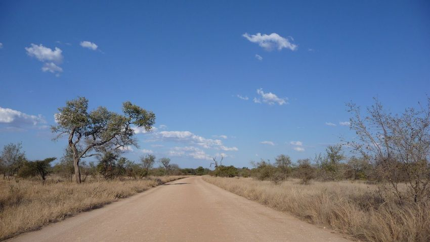 Roadtrip through Kruger Park in South Africa - Africa Blue Sky No Edit/no Filter Landscapes African Landscape Road Scenery African Safari Safari Wide Open Spaces Space Nature Bluesky