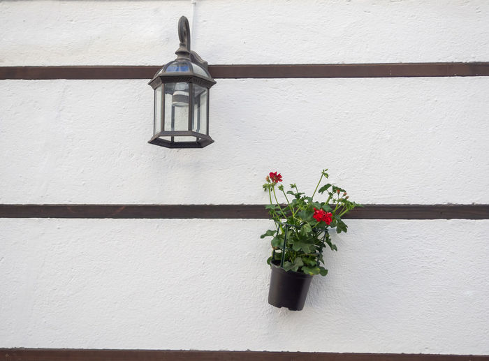 Low angle view of potted plant against wall