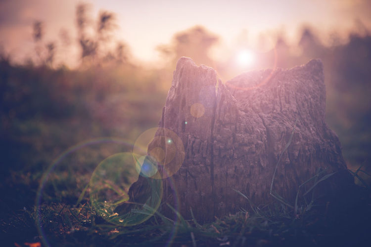 Warm sunlight in sunset time, natural background