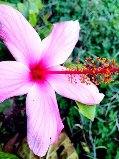 Pink Color Flowers ❤️ Lovers Inspiration Nature 🌺🌸