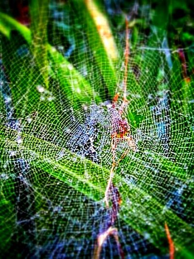 Nature Spiderweb Vintage Technology ha ha Nature_collection Close-up Water Droplets Deathtrap Showcase: December