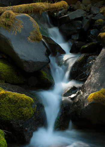 Flowing water over moss covered rocks. Pacific Northwest, Washington State Flowing Water Beauty In Nature Blurred Motion Day Flowing Water Green Moss Long Exposure Moss Covered Log Moss Covered Rocks Motion Nature No People Outdoors Rapid River Rock - Object Scenics Speed Water Waterfall