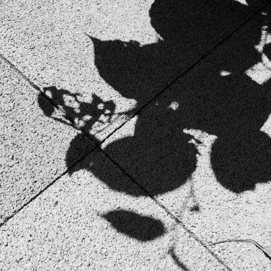 holes B&w Shadow Sunny Day