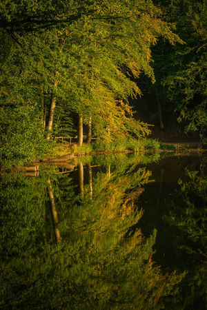 Trees are reflected in the water late summer autumn Natural Spectacle Romantic Trees Water Reflections Beauty In Nature Evening Ligth Reflections In The Water Scenics - Nature