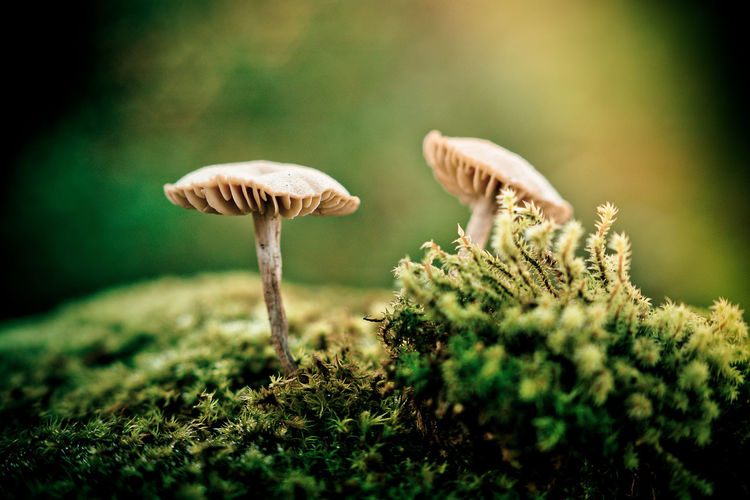 The two lovers II Beauty In Nature Botany Close-up Focus On Foreground Fragility Freshness Fungus Green Color Growing Growth Mushroom Nature Selective Focus Soil Surface Level Tranquility Vegetable Wilderness