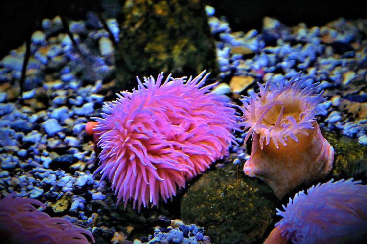 Sea Anemone Genova Italy 🇮🇹 Underwater Sea Life Aquarium Acquario Di Genova UnderSea Water