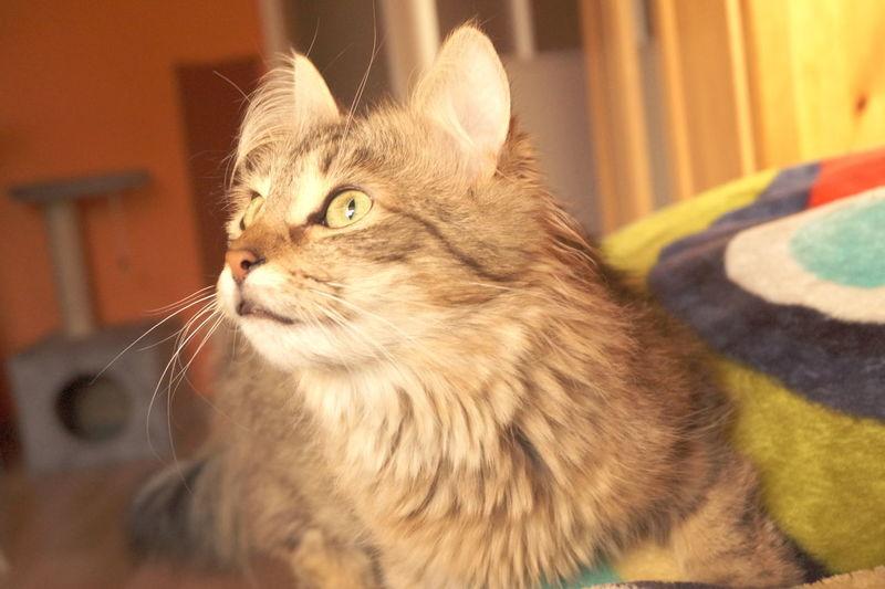 Cat♡ Ofélia Cat Eyes