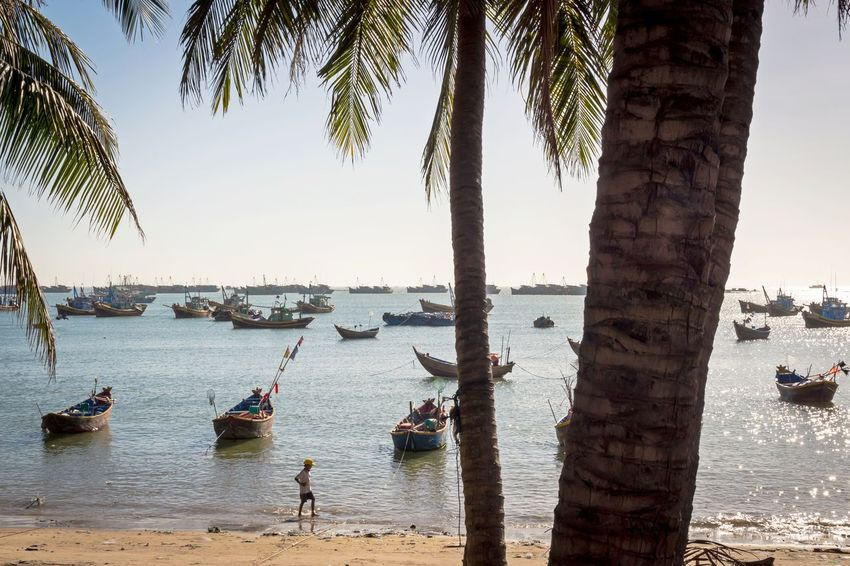 Beach and fishing boats, 2016 Beauty In Nature Day Fishery  Fishing Boats Harbor Mui Ne Mui Ne Beach Nature Nautical Vessel Ocean Outdoors Palm Tree Palm Trees Phan Thiet Sea Sky Sunlight Tranquility Travel Destinations Tree Tree Trunk Vacation Vietnam Vietnam Trip Water