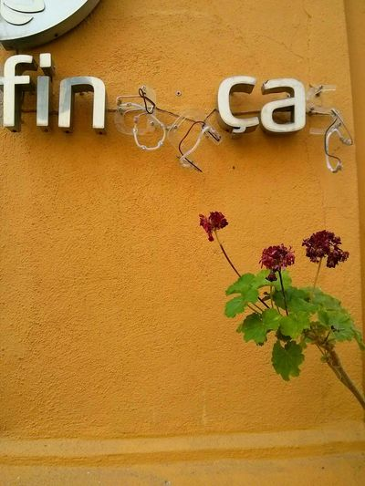 As nossas finanças. Colorful Portugal Troika Time Alentejo,Portugal Alentejo 🌞 Typical Flowers