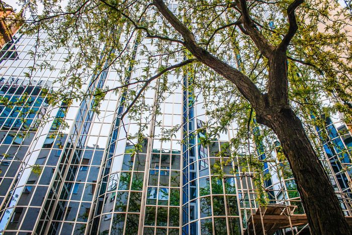 Urban Tree Growth Nature Day No People Green Color Sky Glass Modern