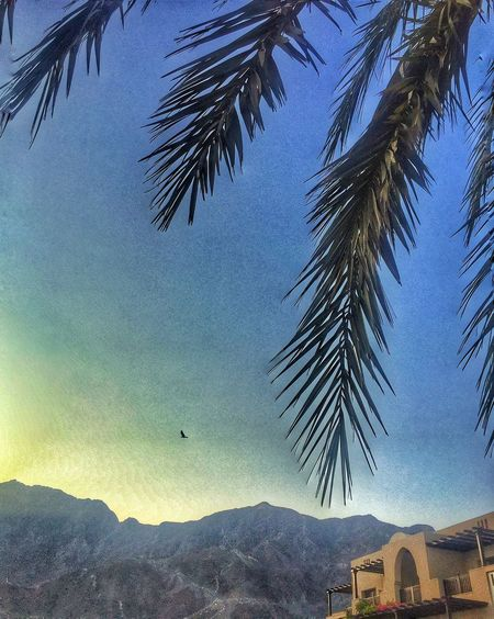 Nice Atmosphere Scenery Ambiance Palm Trees Backdrop Blue Sky Mountain View Resort Vacation Bird