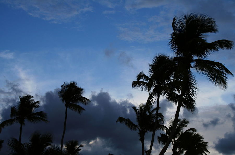 2007 Dominican Republic Dominicus Beach Beauty In Nature Blue Cloud - Sky Day Growth Low Angle View Nature No People Outdoors Palm Frond Palm Tree Scenics Silhouette Sky Tree Tree Trunk