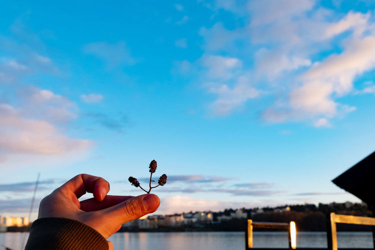 Cropped hand of person holding dry plant against sea and sky
