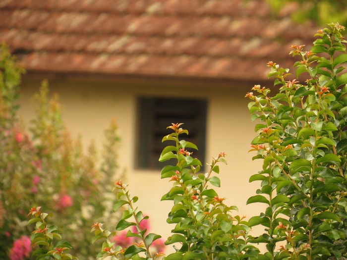 Close-Up Of Plant Against House