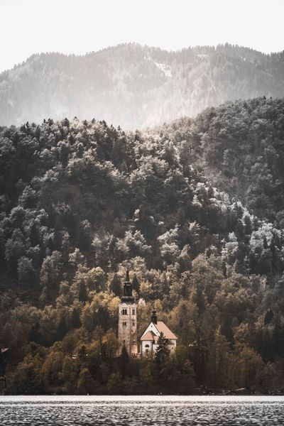 Lake Bled Island Church Church Slovenia Lake Bled Architecture Tree Built Structure Building Exterior Plant Building Sky Nature House No People Day Outdoors Water Beauty In Nature Land Residential District Growth Sunlight Scenics - Nature The Traveler - 2018 EyeEm Awards