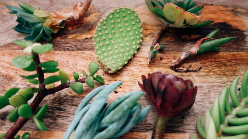 Flower Apartment Gardening Garden Plant Cactus Succulents Leaf High Angle View Green Color Vegetable No People Food Indoors  Plant Nature Day Close-up