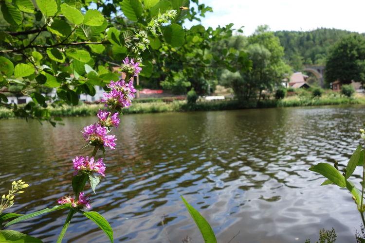 Saale River