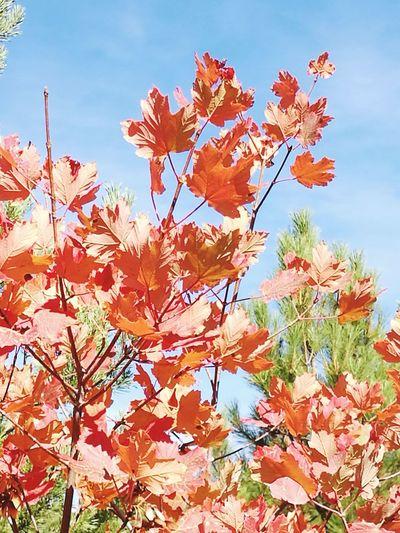 Autumn in Spain Season  Autumn Leaf Beauty In Nature Growth Leaf Colour Of Life Season  Change