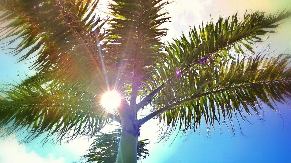 El calor tropical nayarita.