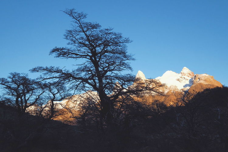 Patagonia Mountains Mountain Sunrise Landscape Scenics Lost in the Landscape El Chalten Patagonia Argentina Patagonia Hiking Cold Temperature Tree Snow Sky Snow Covered Pine Tree Pine Woodland Snowcapped Mountain Cold Deep Snow
