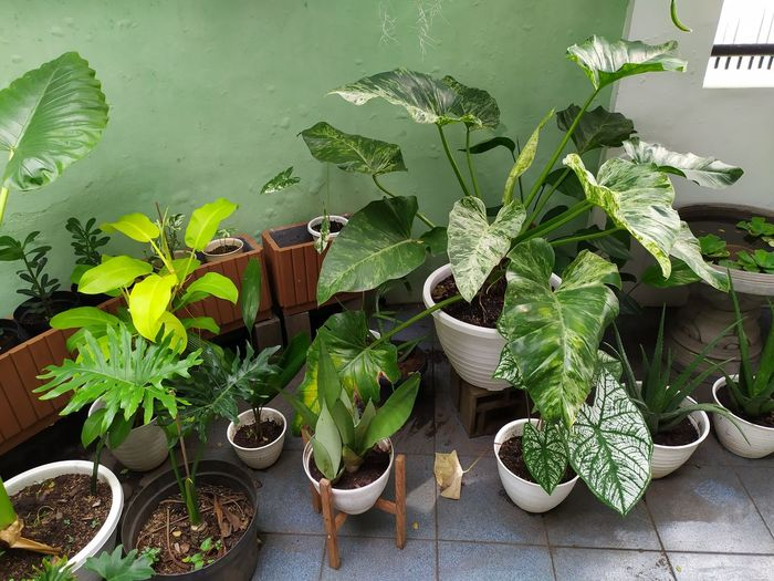 High angle view of potted plants on table at yard