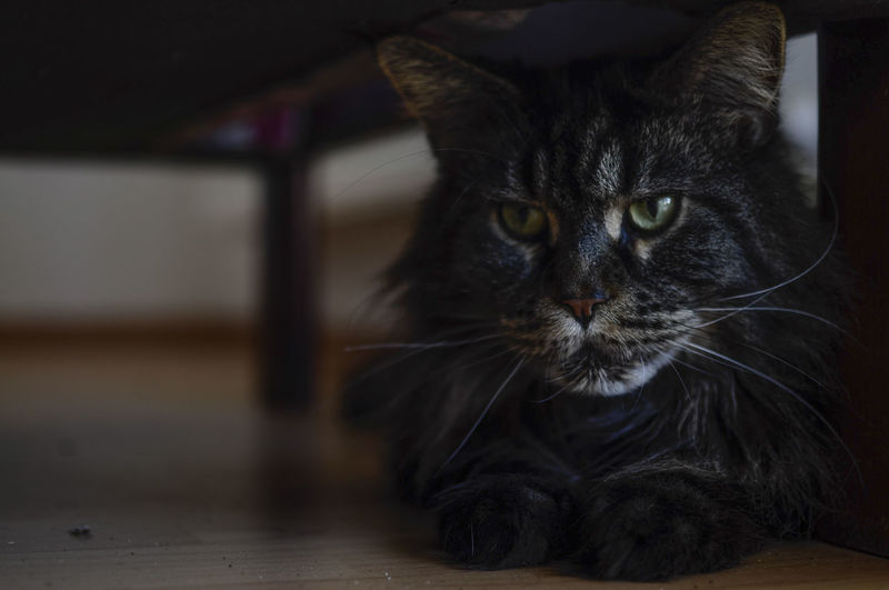 Close-up of cat on floor