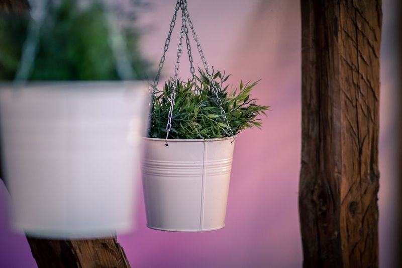 Plant Potted Plant Growth Nature No People Day Outdoors Wood - Material Decoration Beauty In Nature Green Color Tree Window Wall - Building Feature Close-up Purple Cactus Houseplant Focus On Foreground Flower Pot