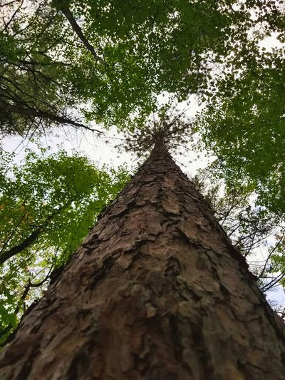 Tree Low Angle View Tree Trunk Nature Growth Day Outdoors No People Branch Beauty In Nature Sky Close-up The Week On EyeEm EyeEmNewHere