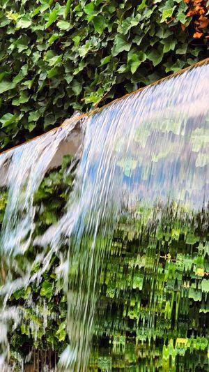 Brunnen Plant