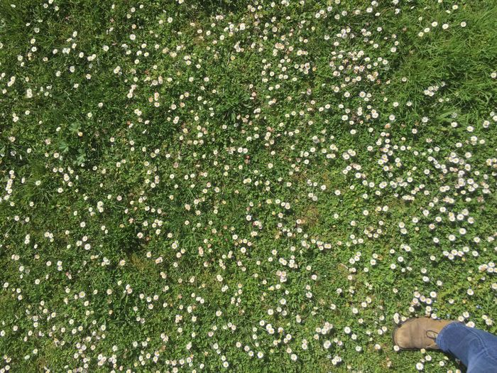 A field full of
