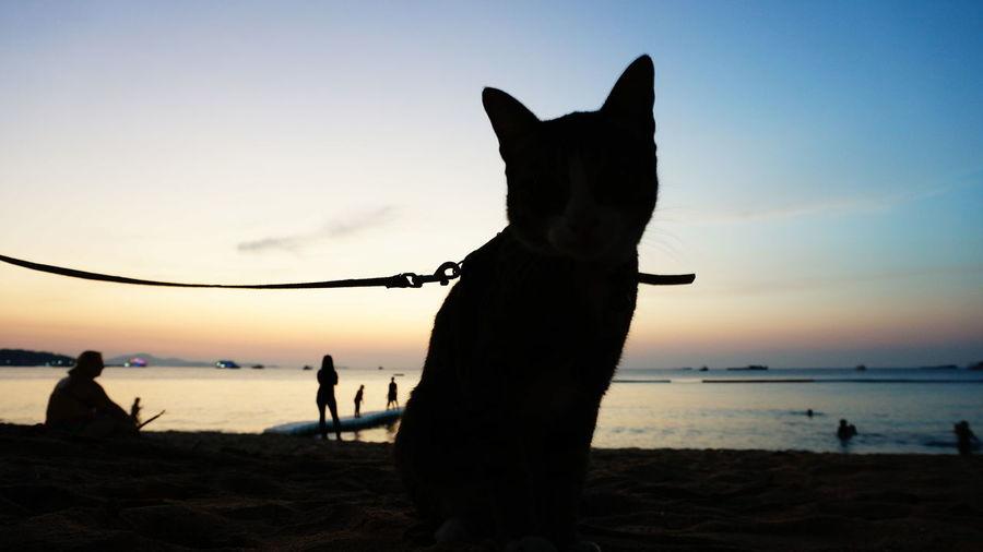Silhouette of cat amongst people on seashore