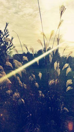 Beautiful Nature sun ray