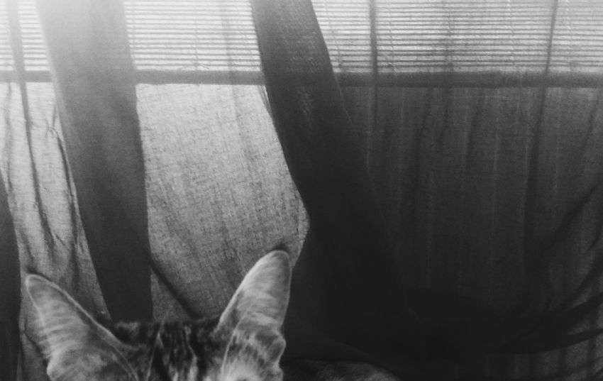 Indoors  Window Absence Personal Perspective Overhead View Cat♡ Catlove Lacking Missing Minimalism Minimalistic Ankara/turkey Close-up Home Interior Softness Relaxation