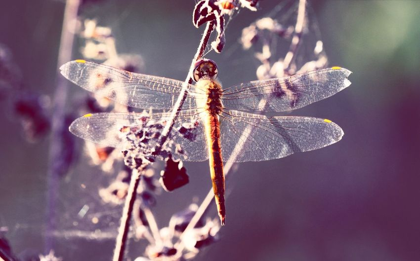 Dragon fly buzzing on plant in park