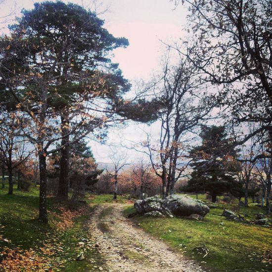 Beauty In Nature Branch Day Grass Growth Guadarrama Landscape Love Nature Navidad No People Outdoors Paseandoperros Sierra Sky Tranquil Scene Tranquility Tree