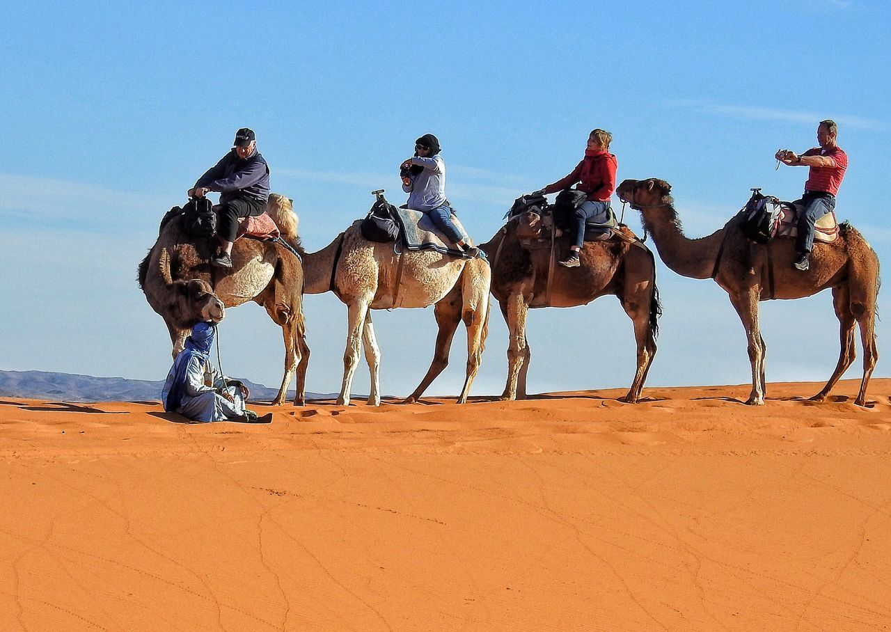 domestic animals, desert, working animal, mammal, sand, clear sky, riding, sky, arid climate, day, outdoors, men, real people, nature, women, sand dune, people