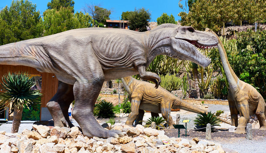 Algar, Spain - April 8, 2017: Realistic models of a Tyrannosaurus Rex and Diplodocus dinosaurus in the Dino Park of Algar. It is a unique entertainment and educational park. Spain älgar Dino DinoPark Dinosaur Hazardous Reptile SPAIN Tyrannosaurus Rex Amusement Park Animal Themes Carnivorous Day Dino Park Entertainment Park Europe Herbivorous Jurassic Period No People Outdoors Paleontology Powerful Realistic Sunny Day T-rex Tyrannosaurus